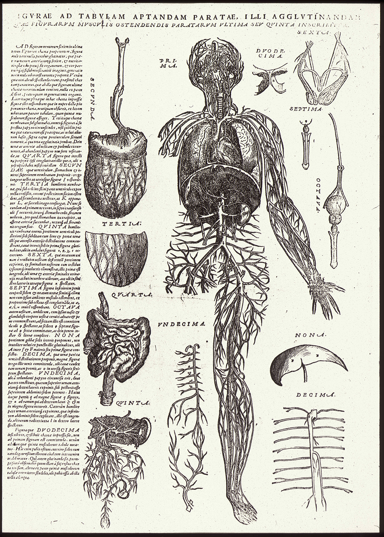 Illustration from Andreas Vesalius, De humani corporis fabrica librorum epitome (1543)