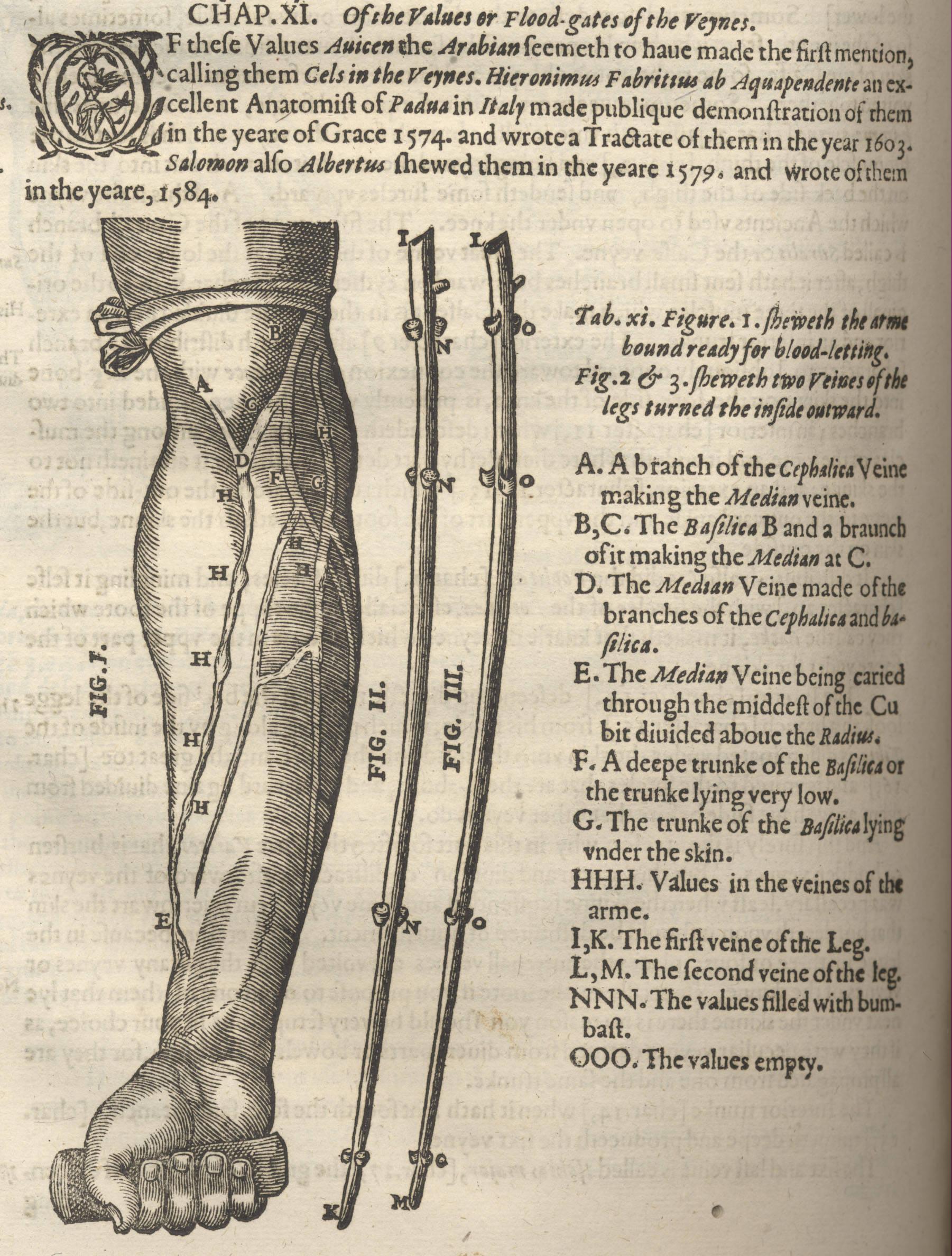 Illustration from Crooke's 'Mikrokosmographia'