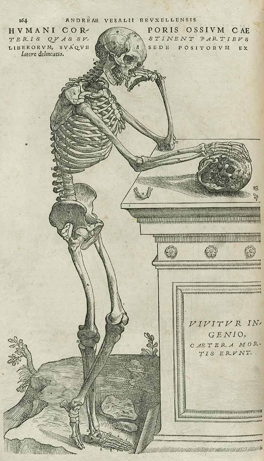Image of a skeleton from Andreas Vesalius, De humani corporis fabrica libri septem (Basel, 1555)